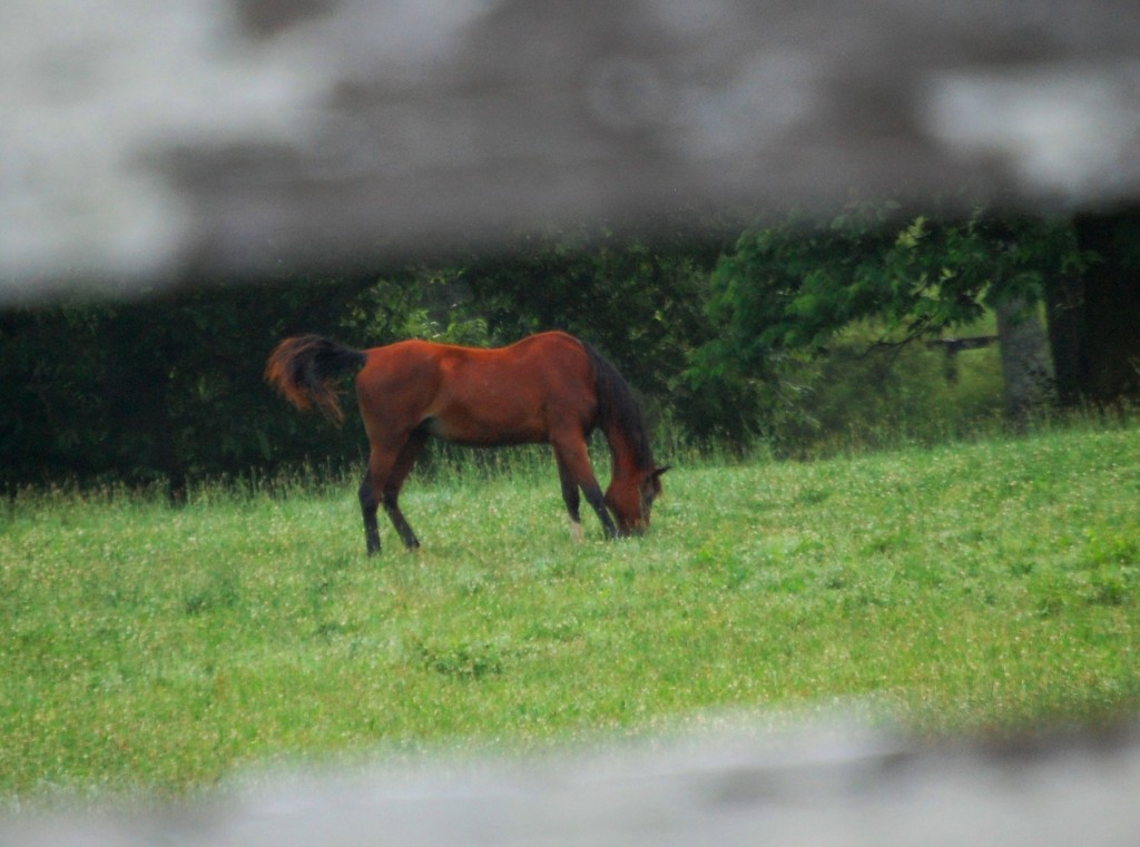 Horse grazing peacefully in the morning